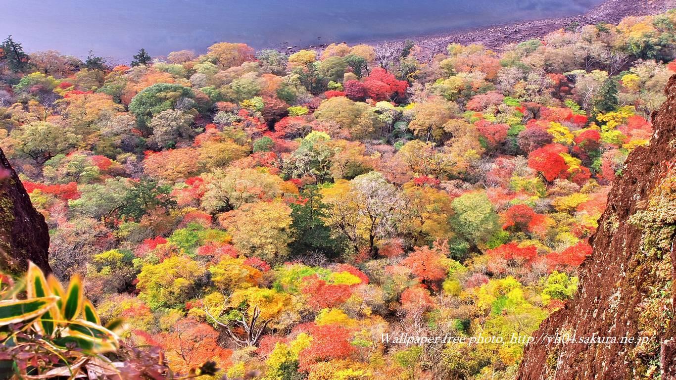見下ろす景色一面紅葉の壁紙