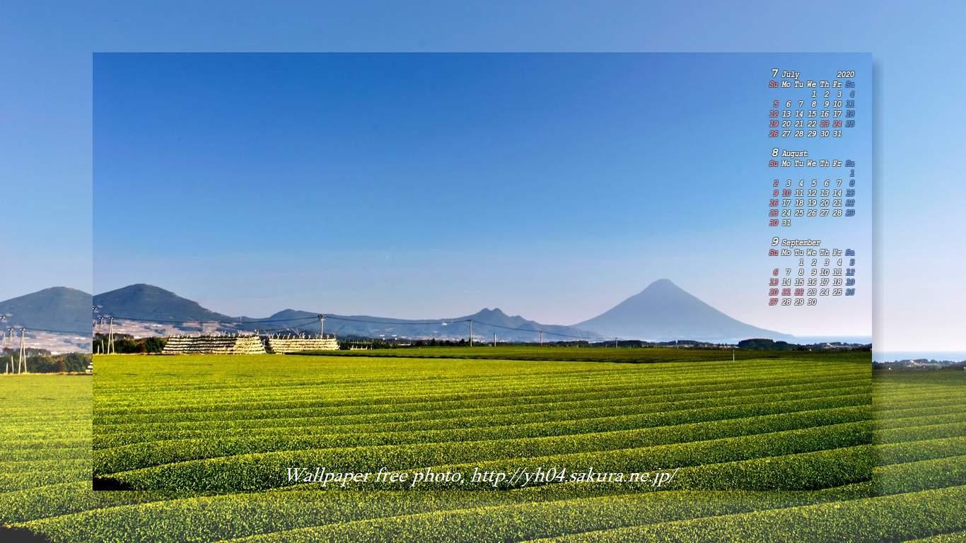 茶畑と開聞岳 年7月8月9月のカレンダー付き 高画質 1366 768 デスクトップ無料壁紙 です